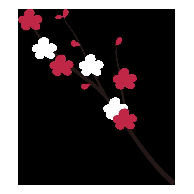枝付きの梅の花1