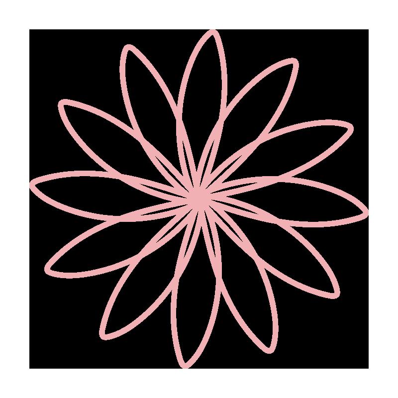 細い花びらのピンクのお花2