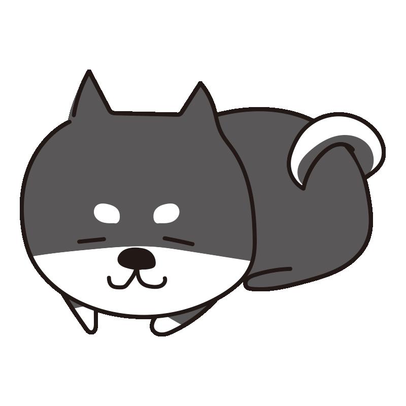 寝ている柴犬(黒)
