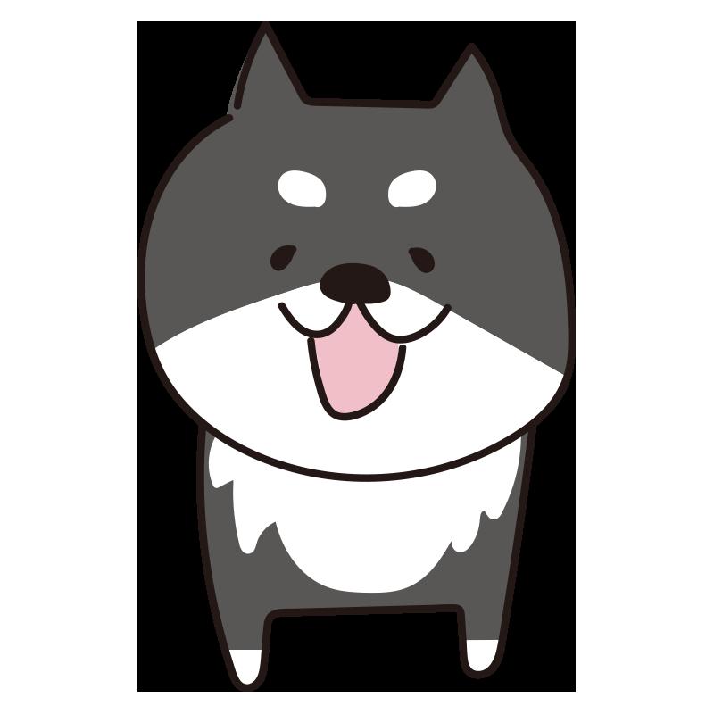 立っている柴犬(黒)