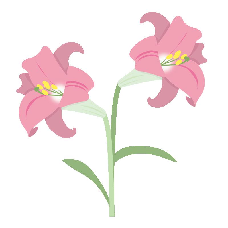 二輪のピンクのユリの花