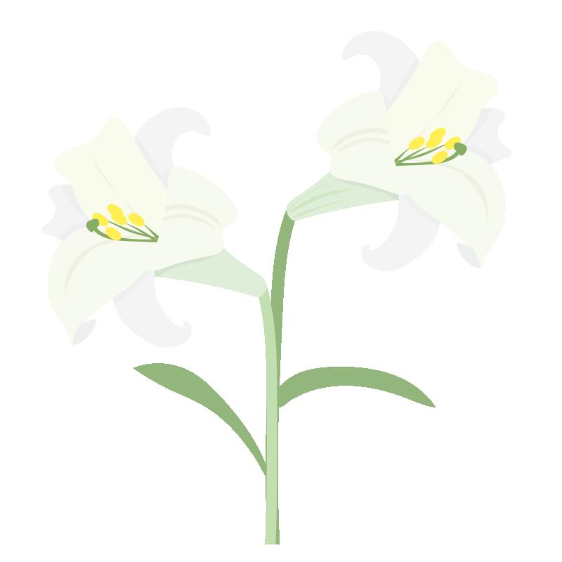 二輪の白いユリの花