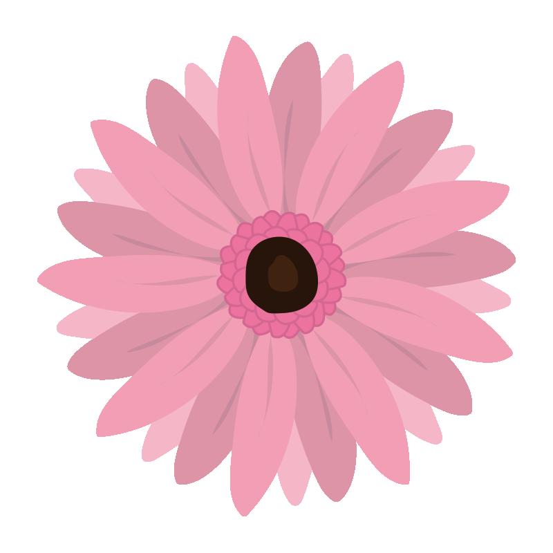 ピンク色のガーベラの花