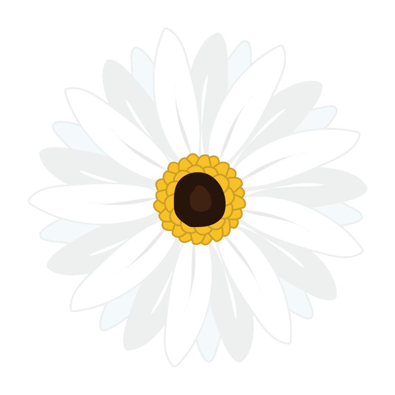白いガーベラの花