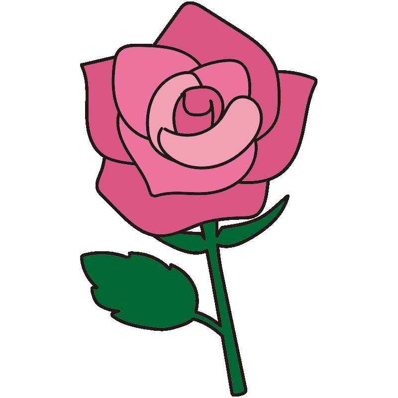 1本のピンクのバラ1