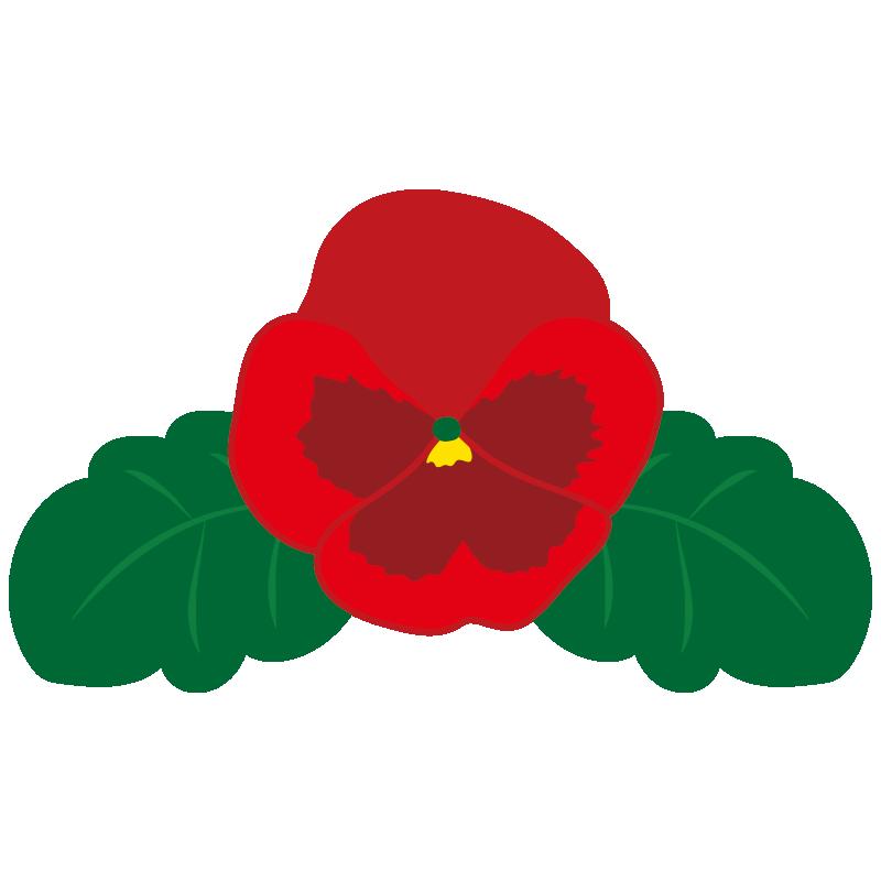 赤いパンジーの花2