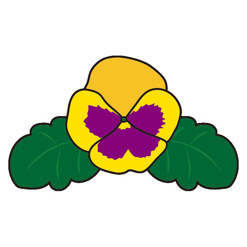 黄色いパンジーの花1