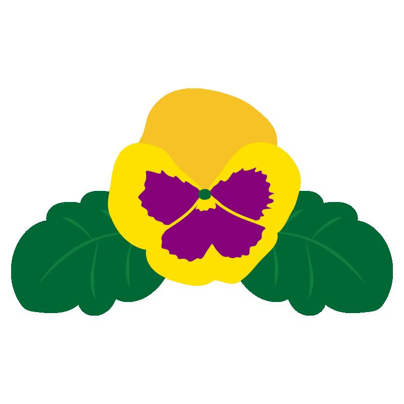黄色いパンジーの花2