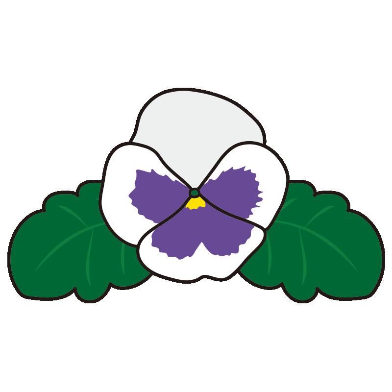 白いパンジーの花1