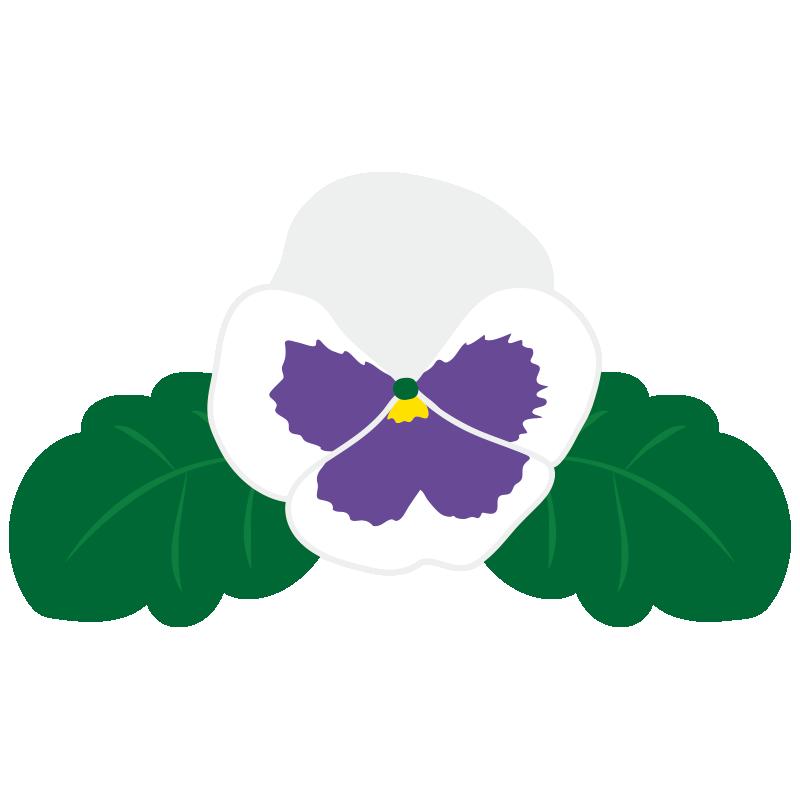 白いパンジーの花2