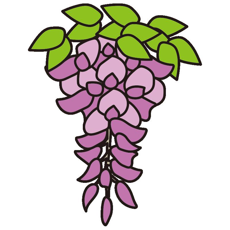 1房の藤の花1