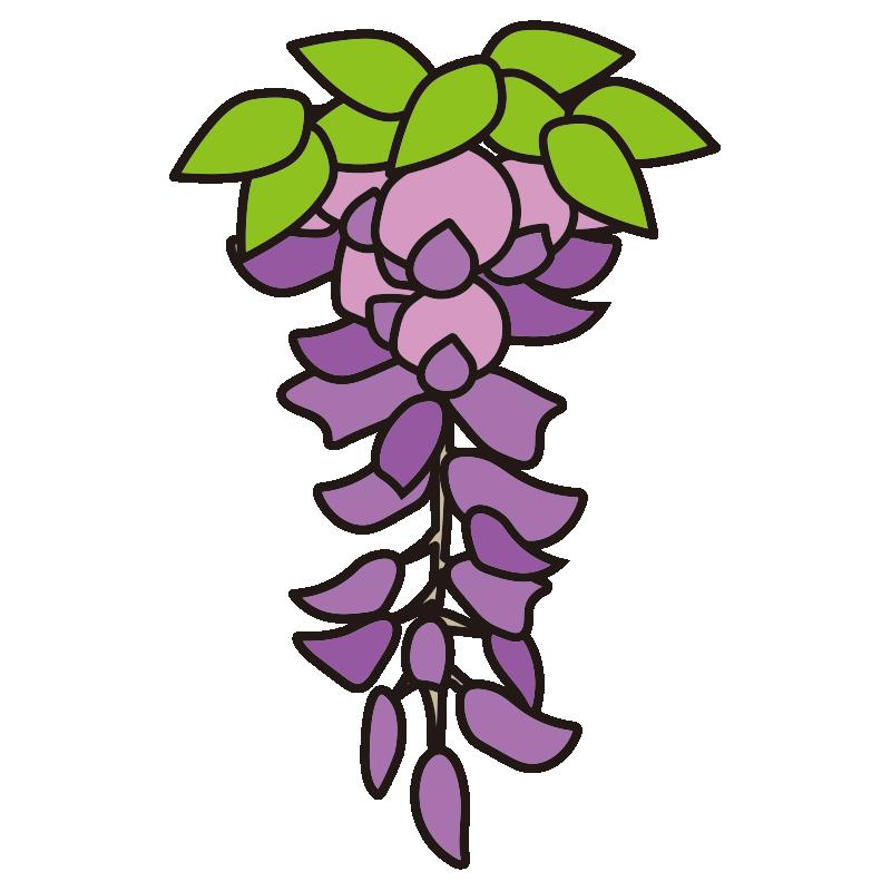 1房の藤の花3