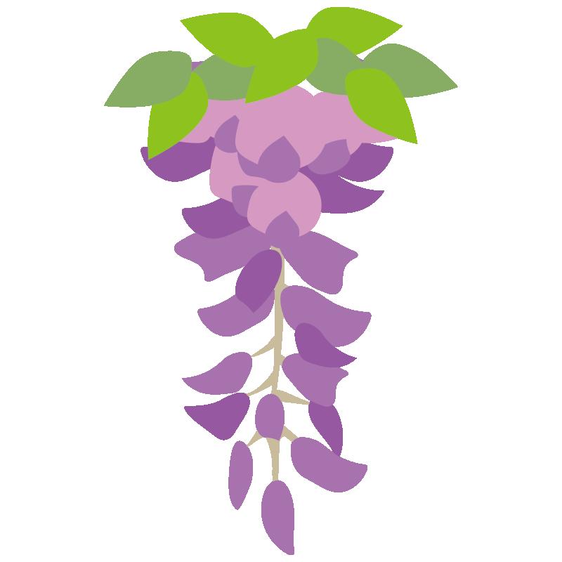 1房の藤の花4