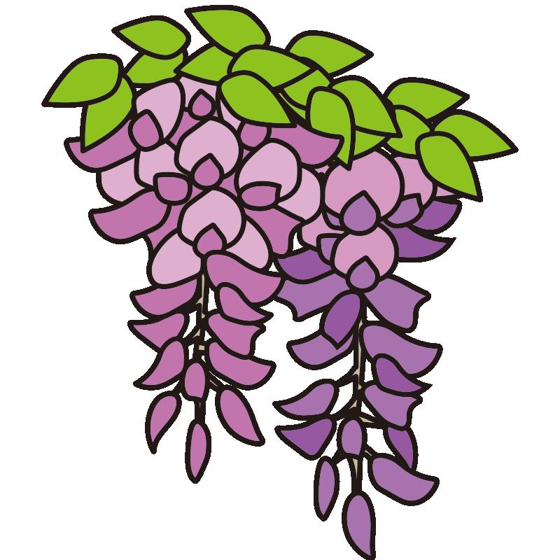 2房の藤の花1