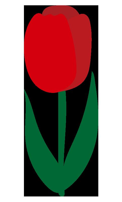 チューリップ(赤)2