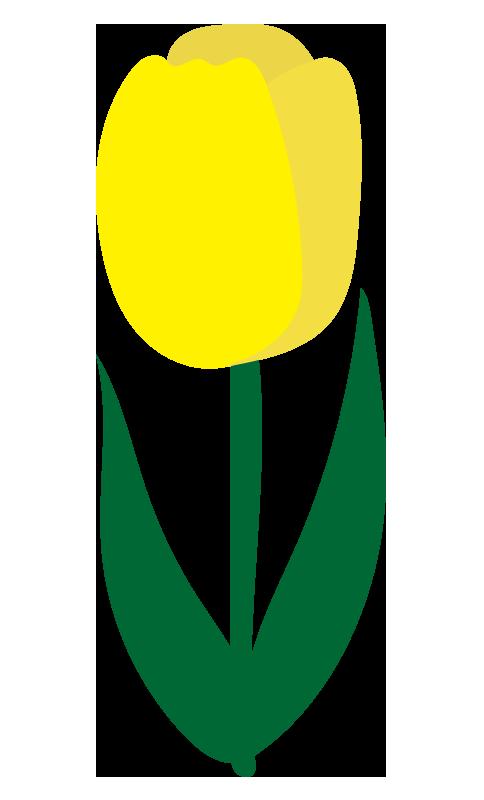 チューリップ(黄)2