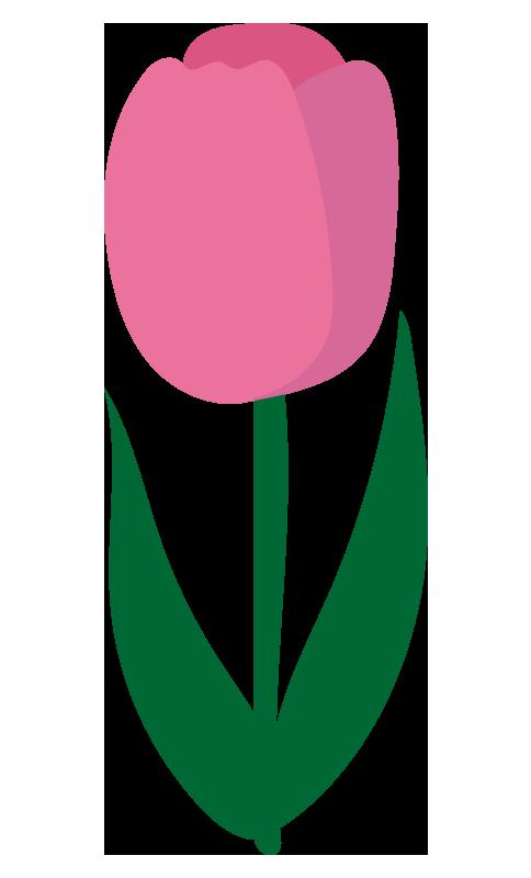 チューリップ(ピンク)2