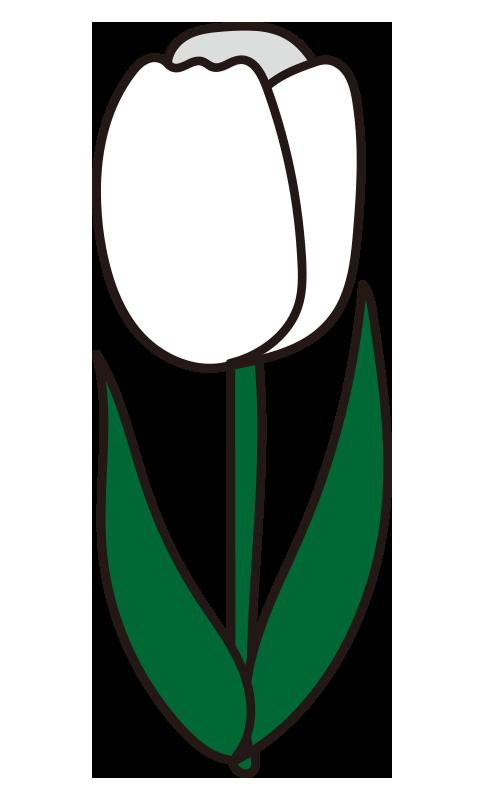 チューリップ(白)