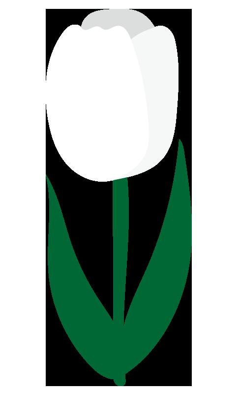 チューリップ(白)2