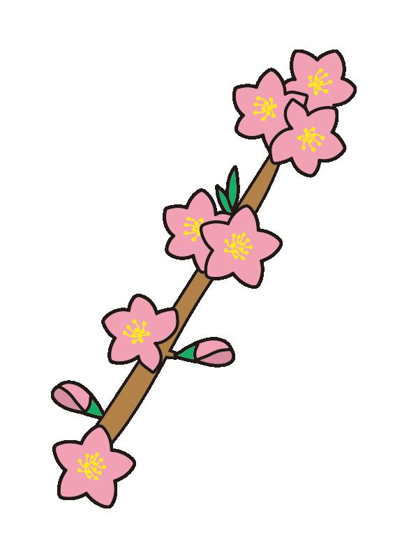枝付きの桃の花1