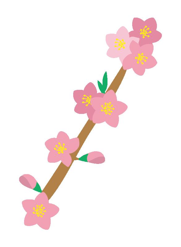 枝付きの桃の花2