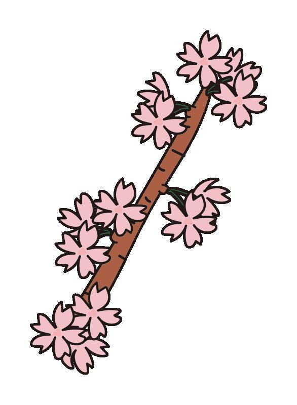 枝付きの桜の花1