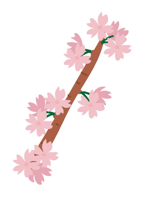 枝付きの桜の花2