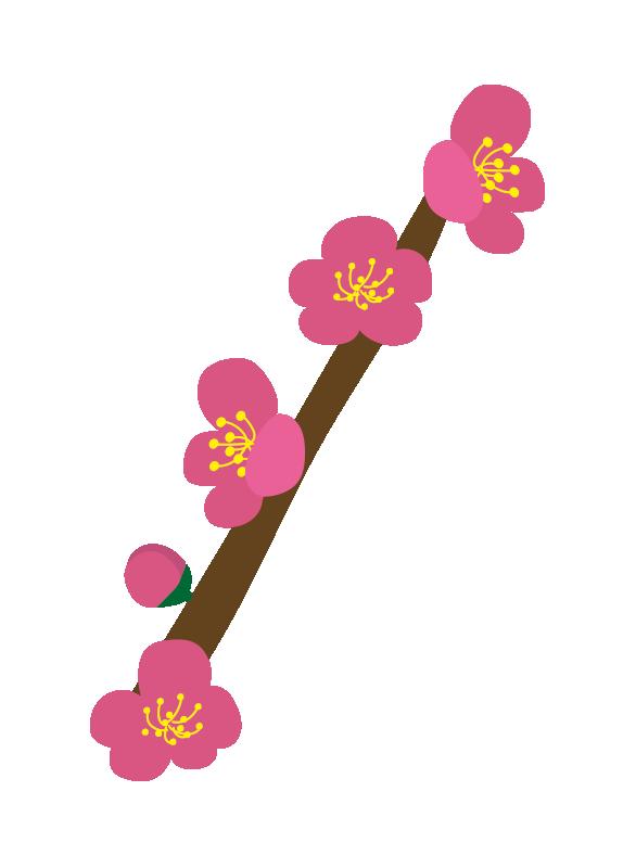枝付きの梅の花2