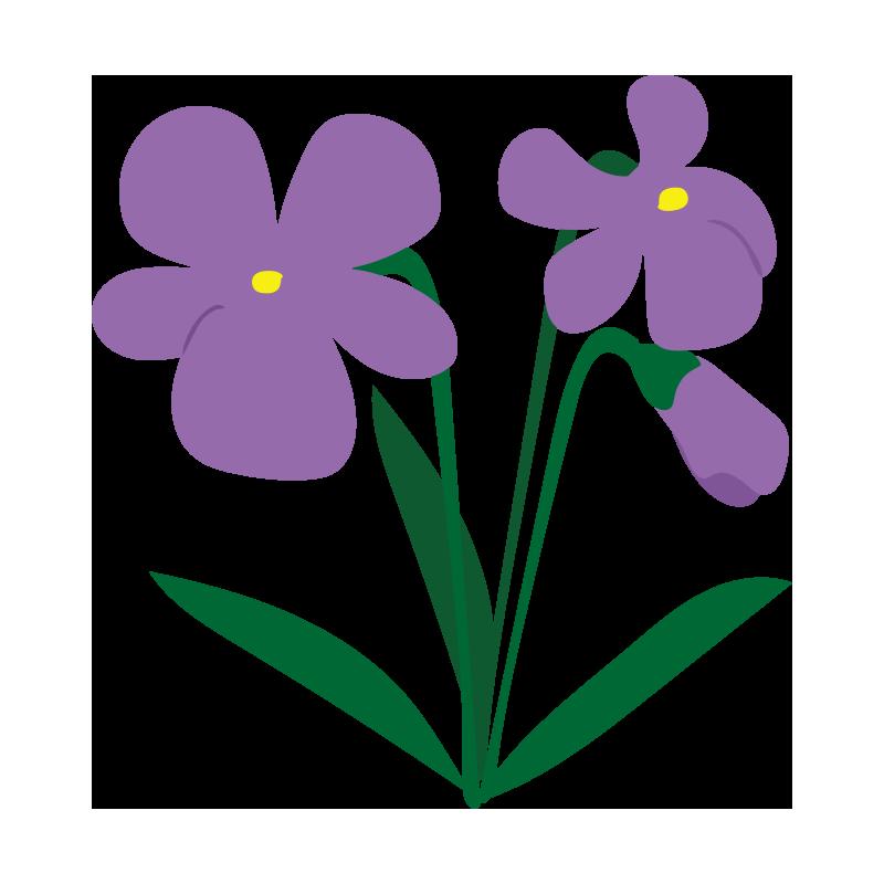 すみれの花4